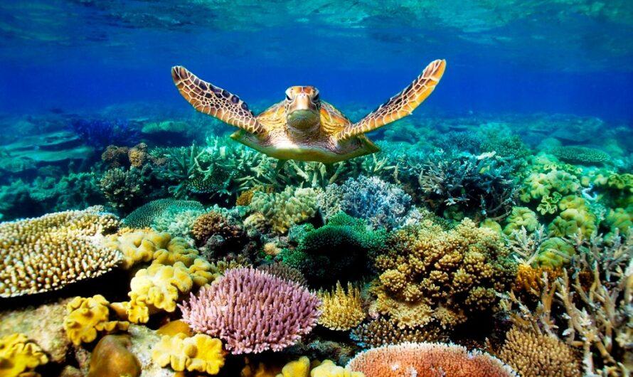ТОП 5 Мальдивы. Отель с хорошим рифом